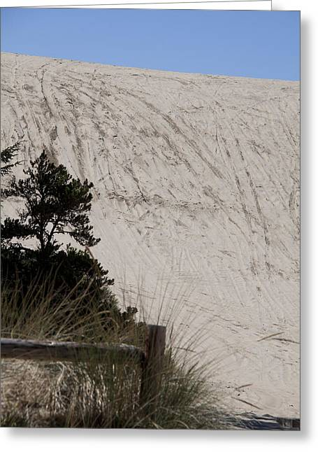 Oregon Dunes National Recreation Area Greeting Cards - Oregon Dunes National Recreation Area - 0005 Greeting Card by S and S Photo
