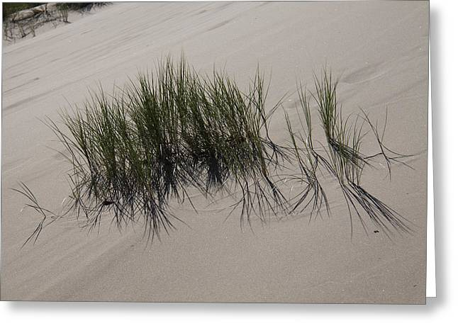 Oregon Dunes National Recreation Area Greeting Cards - Oregon Dunes National Recreation Area - 0008 Greeting Card by S and S Photo