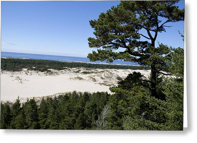 Oregon Dunes National Recreation Area Greeting Cards - Oregon Dunes National Recreation Area - 0009 Greeting Card by S and S Photo