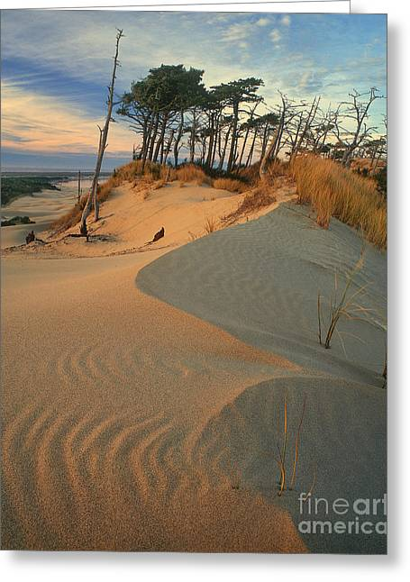 Oregon Dunes National Recreation Area Greeting Cards - Oregon Dunes National Recreation Area Oregon Greeting Card by Dave Welling