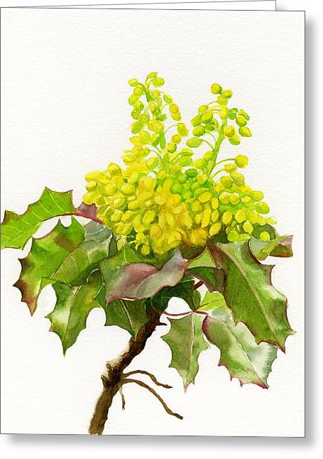 State Flowers Greeting Cards - Oregon Grape white background Greeting Card by Sharon Freeman