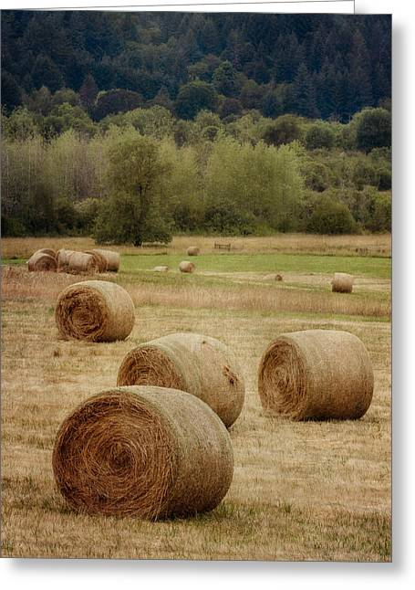 Hay Bale Greeting Cards - Oregon Hay Bales Greeting Card by Carol Leigh