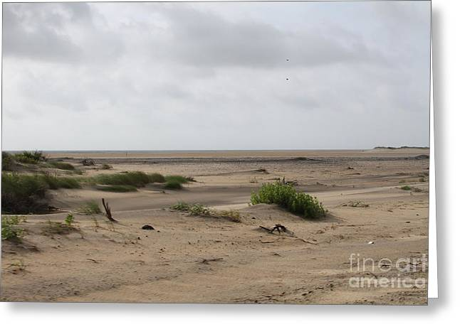 Sand Greeting Cards - Oregon Inlet Sand Flats Greeting Card by Cathy Lindsey