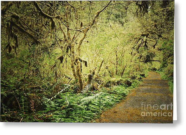Moss Green Greeting Cards - Oregon Moss Trail Greeting Card by Andrea Hazel Ihlefeld