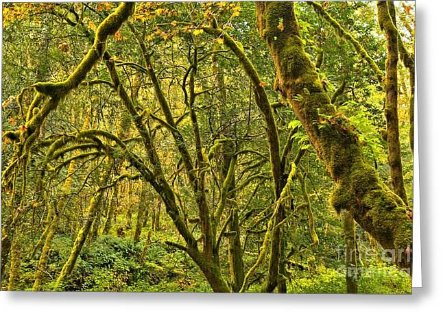 State Parks In Oregon Greeting Cards - Oregon Rainforest Greeting Card by Adam Jewell