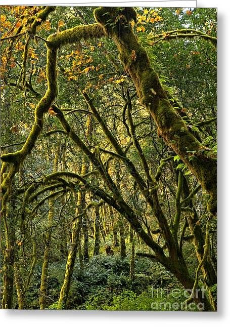 State Parks In Oregon Greeting Cards - Oregon Rainforest Green Greeting Card by Adam Jewell
