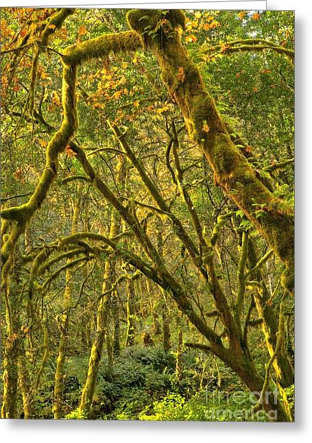 State Parks In Oregon Greeting Cards - Oregon Rainforest Portrait Greeting Card by Adam Jewell