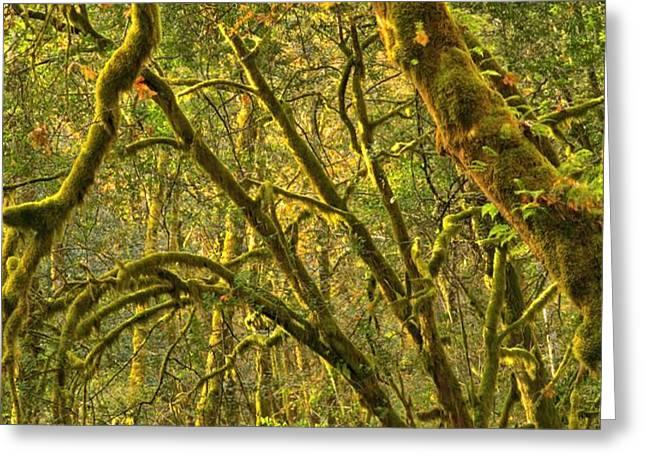 Oregon Rainforest Portrait Greeting Card by Adam Jewell