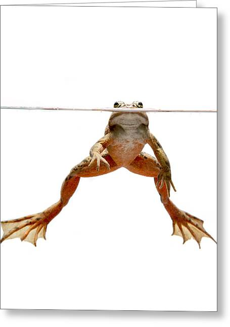 True Color Photograph Greeting Cards - Oregon Spotted Frog Conboy Lake Greeting Card by Michael Durham
