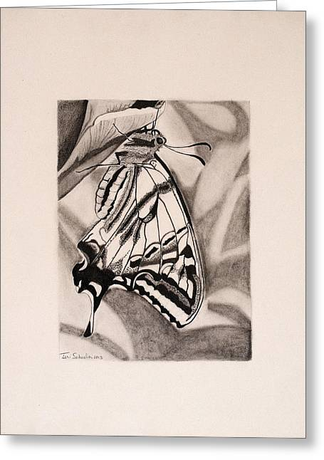 Macro Drawings Greeting Cards - Oregon Swallowtail Butterfly  Greeting Card by Teri Schuster