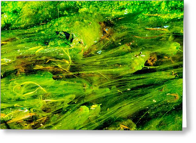 Lettuce Greeting Cards - Organic Abstract Greeting Card by Drew Castelhano