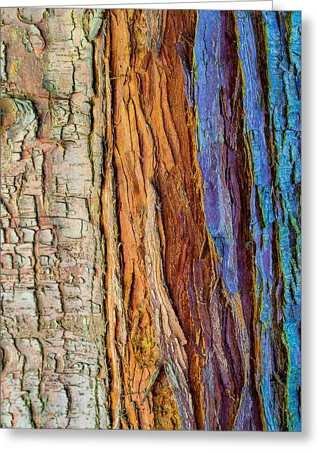 Colourful Bark Greeting Cards - Organic Bark Texture 11 Greeting Card by Hakon Soreide