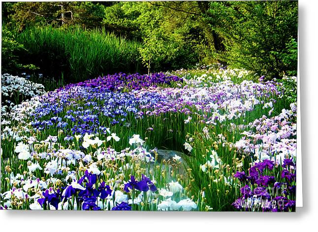 Garden Scene Digital Greeting Cards - Oriental Ensata Iris Garden Greeting Card by Carol F Austin