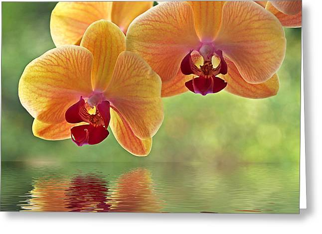 Recently Sold -  - Flower Design Greeting Cards - Oriental Spa - Square Greeting Card by Gill Billington