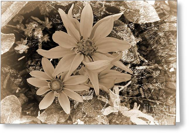 Floral Photographs Mixed Media Greeting Cards - Original Touch Greeting Card by Beverly Guilliams