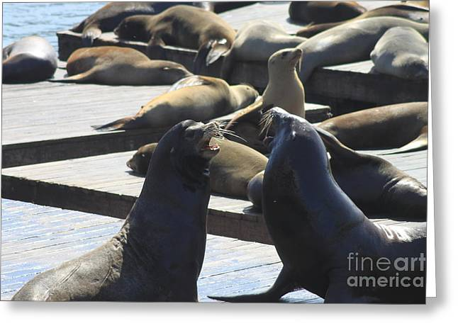 Recently Sold -  - Sea Lions Greeting Cards - Orignal Seals Greeting Card by Gene Treants