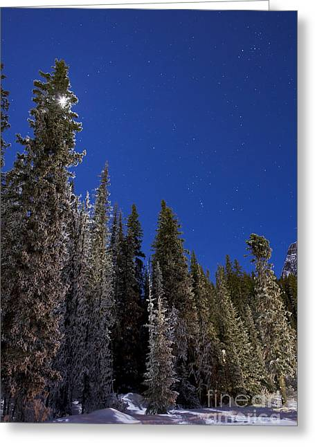 Asterism Greeting Cards - Orion Constellation Above Winter Pine Greeting Card by Alan Dyer