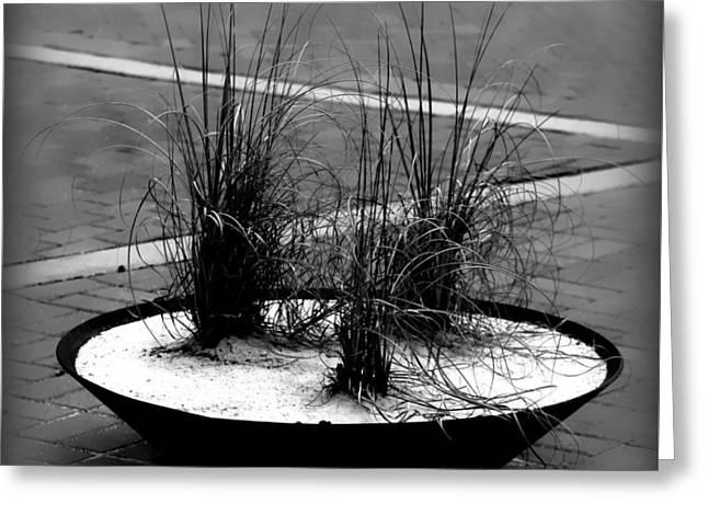Ornamental Grass Display Greeting Card by Debra Forand
