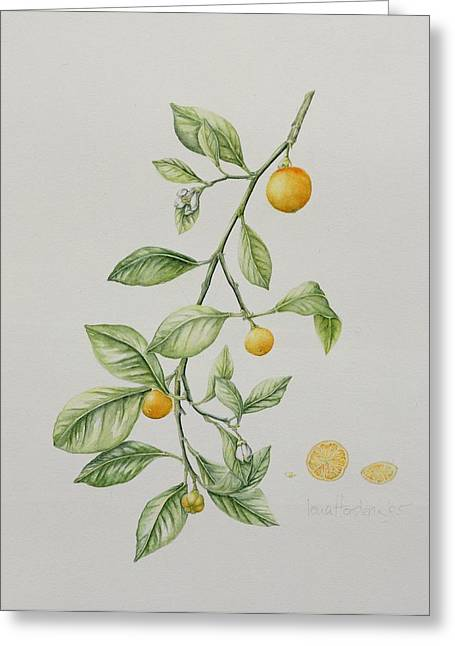 Sections Greeting Cards - Ornamental Orange  Greeting Card by Iona Hordern
