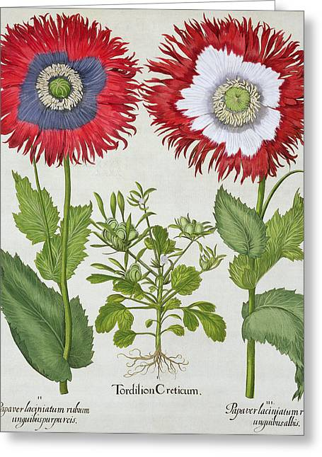 Blue Flowers Drawings Greeting Cards - Ornamental Poppies, From The Hortus Greeting Card by German School