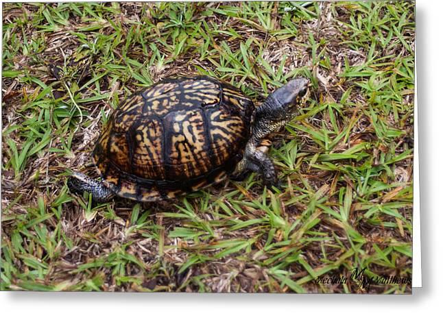 Box Turtle Greeting Card by Mechala  Matthews