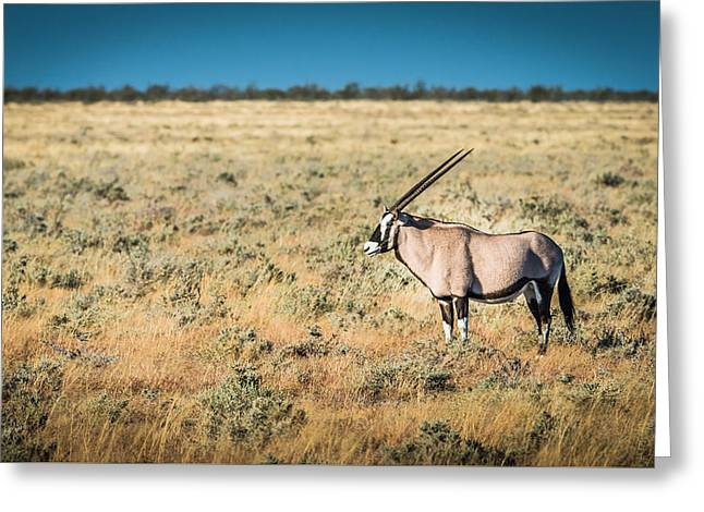 Gemsbok Greeting Cards - Oryx Profile - Color Oryx Photograph by Duane Miller Greeting Card by Duane Miller