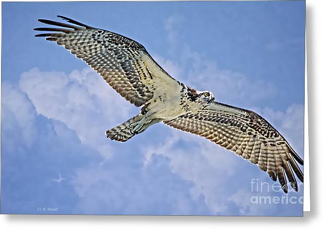 Clouds Deborah Benoit Greeting Cards - Osprey 91711 Greeting Card by Deborah Benoit