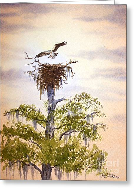 Hunting Bird Greeting Cards - Osprey Approaching Nest Greeting Card by Bill Holkham