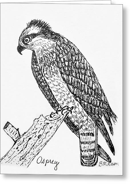 Osprey Drawings Greeting Cards - Osprey Greeting Card by Becky Mason
