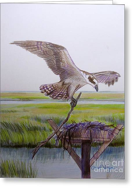 Osprey Drawings Greeting Cards - Osprey building his nest Greeting Card by Carol Veiga