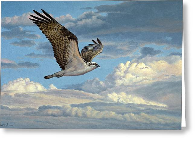 Cloudscape Greeting Cards - Osprey in the Clouds Greeting Card by Paul Krapf