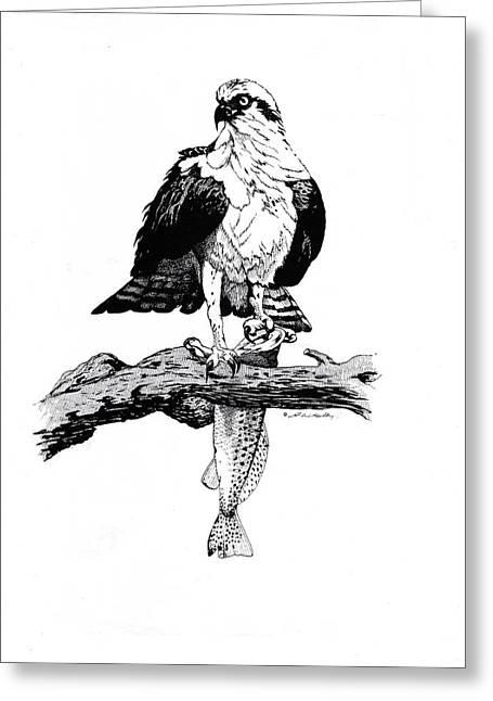 Osprey Drawings Greeting Cards - Osprey Greeting Card by J W Kelly