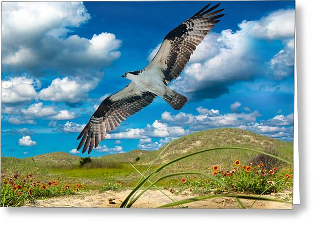 Stretching Wings Greeting Cards - Osprey on Shackleford Banks Greeting Card by Betsy A  Cutler