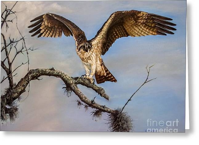Sea Animals Greeting Cards - Osprey on the branch Greeting Card by Zina Stromberg