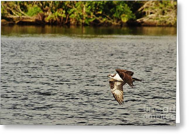 St. Lucie River Greeting Cards - Osprey Over the River Greeting Card by Wibada Photo