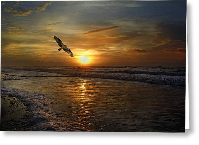 Seabirds Greeting Cards - Osprey Sunrise Greeting Card by Betsy C  Knapp