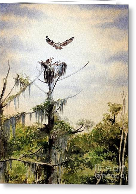 Bird On Tree Paintings Greeting Cards - Ospreys Nesting Wakulla River Greeting Card by Bill Holkham