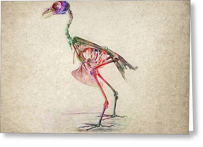 Patch Greeting Cards - Osteology of birds Greeting Card by Aged Pixel