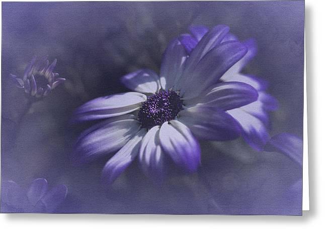 Asti Greeting Cards - Osteospermum  Greeting Card by Richard Cummings