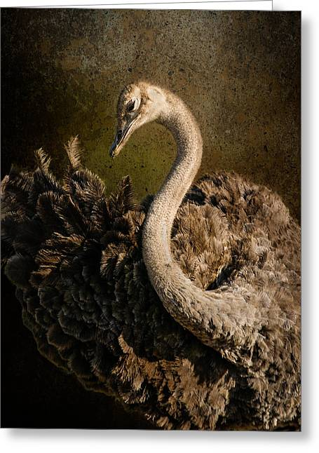 Ostrich Ballet Greeting Card by Mike Gaudaur