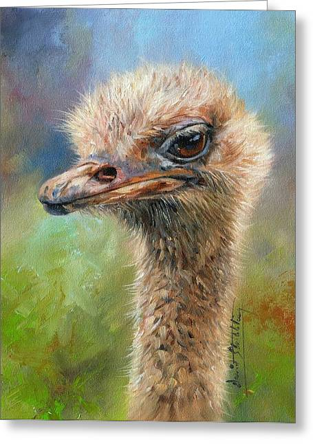 Ostrich Greeting Card by David Stribbling