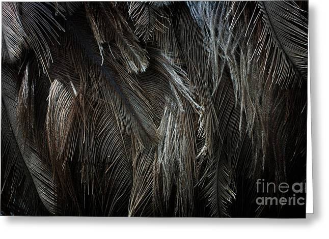 Ostrich Feathers Greeting Cards - Ostrich Feather Texture Greeting Card by Jolanta Prunskaite