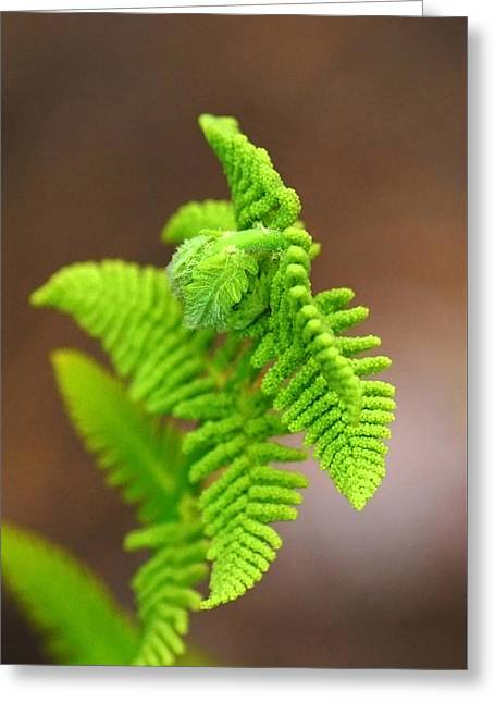 Ostrich Fern Greeting Card by Christina Rollo