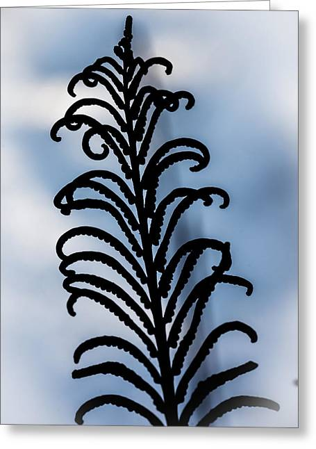Ostrich Fern Greeting Cards - Ostrich Fern Fertile Frond Greeting Card by Christopher Burnett