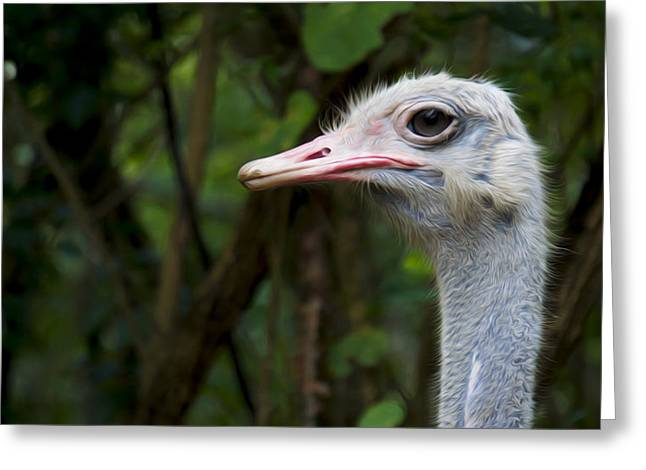 Ostrich Feathers Photographs Greeting Cards - Ostrich head Greeting Card by Aged Pixel