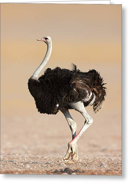 Open Photographs Greeting Cards - Ostrich Greeting Card by Johan Swanepoel