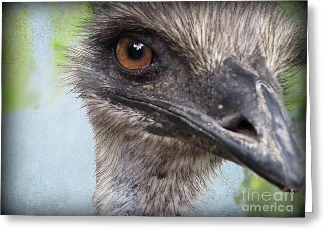 Ostrich Feathers Digital Art Greeting Cards - Ostrich Portrait Greeting Card by Ella Kaye Dickey