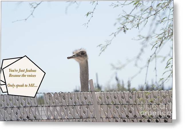 Rooster Cogburn Greeting Cards - Ostrich Voices Greeting Card by Beverly Guilliams