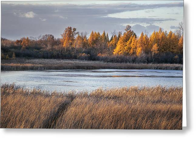 Warm Tones Photographs Greeting Cards - Ottawa Lake Fen in Autumn Greeting Card by Scott Norris