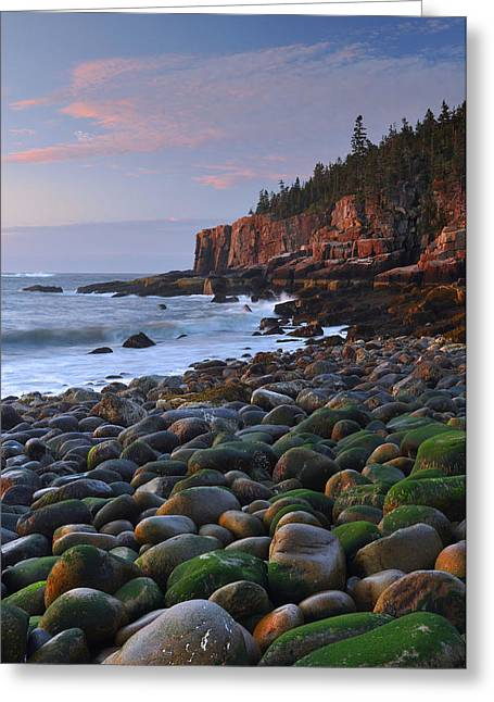 Maine Beach Greeting Cards - Otter Cliffs At Dawn Greeting Card by Stephen  Vecchiotti